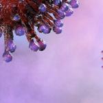 COVID-19 Conseguenze psicologiche della pandemia